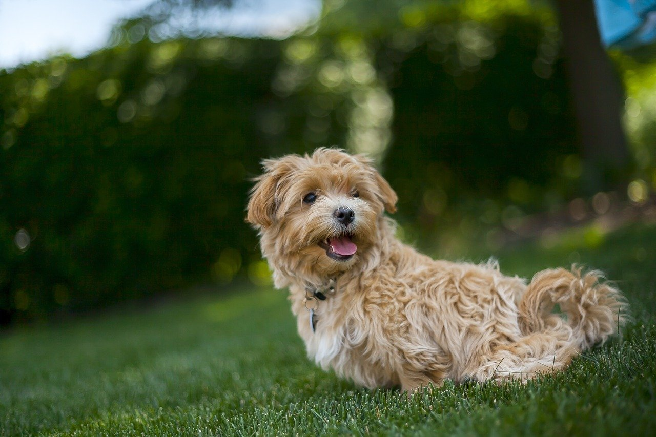 Dog Summer Out Pet Animal Fun Happy Vacation
